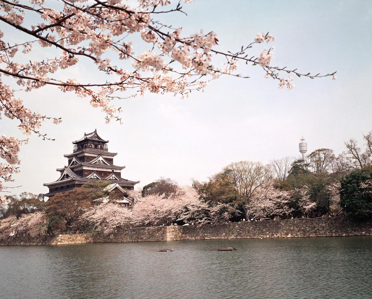 japanischesdesign_kirschblueten_rosa_decohome.de_