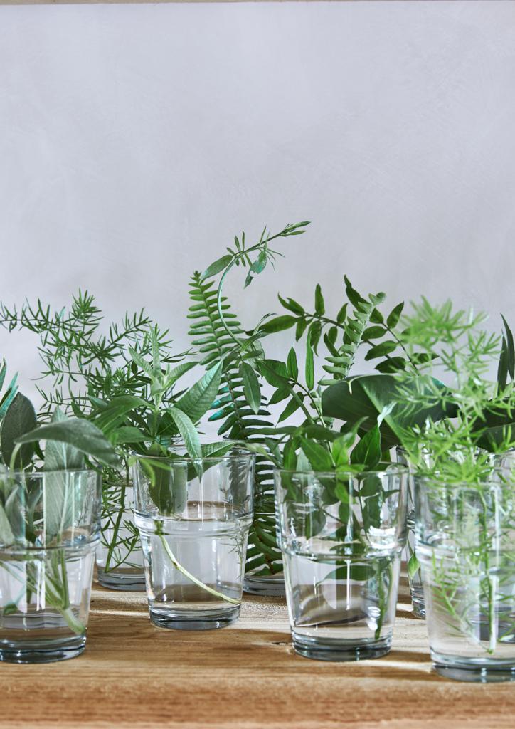 Mallorca Style Pflanzen Arrangement Farne