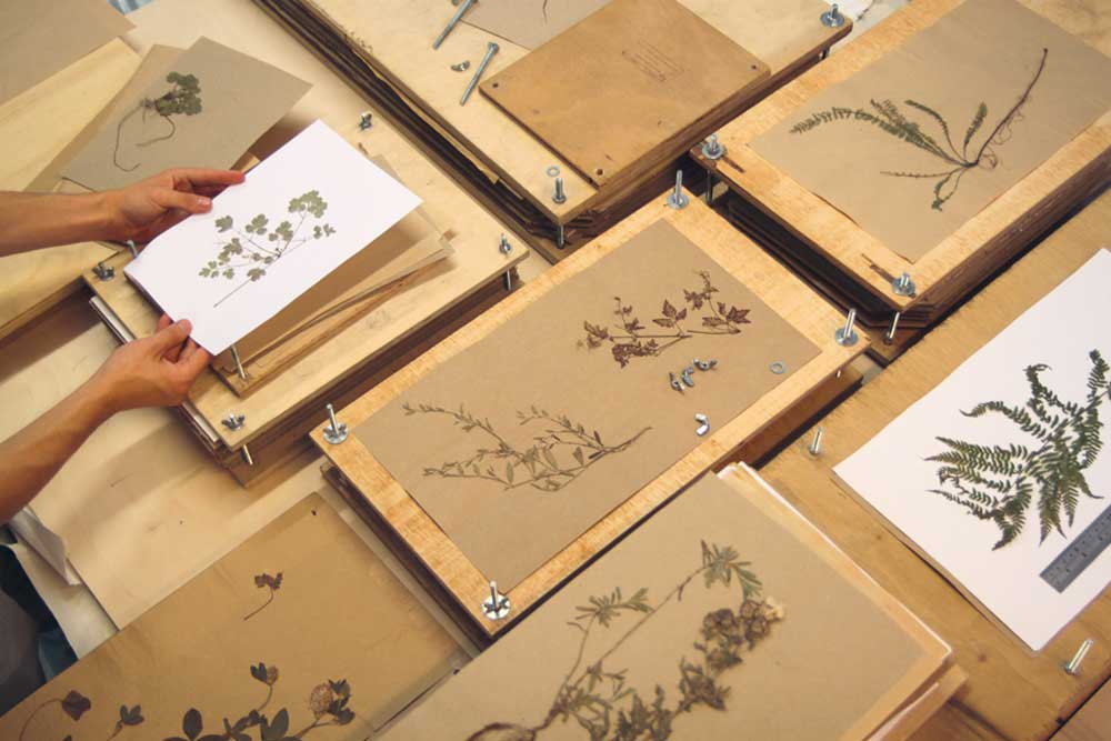 designstudio-glithero-herbarium-decohome.de_